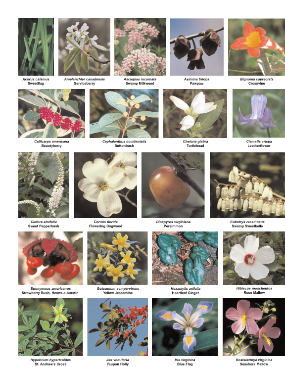 Native Plants for Southeast VA