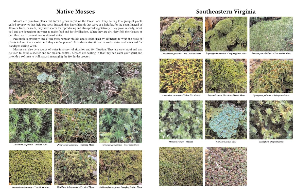 Native Mosses